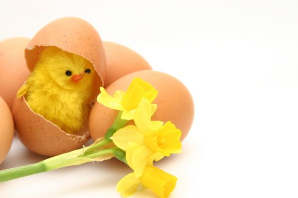 chick_eggshell